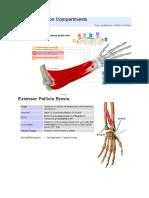 Orthobullet Hand