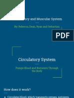 circulatory   muscle presentation