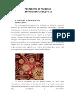 A Importância Da Bactéria No Solo (1)