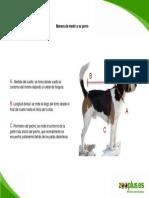 Manera de Medir a Su Perro