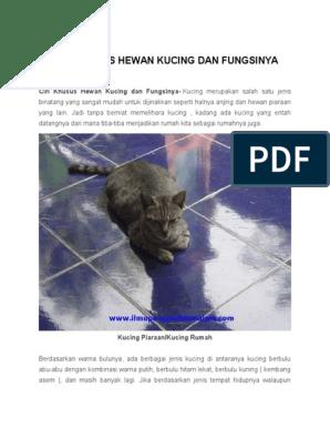 77 Gambar Hewan Kucing Dan Ciri Cirinya HD Terbaru