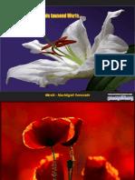 Bellas Flores 8873