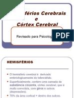 Hemisf. e Cortex Cerebral COMPLETO