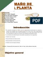 2 Tamaño de Planta Listo