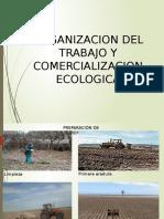 organizacion del trabajp y comercializacion ecologica