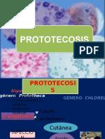 prototecosis