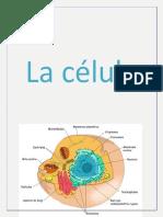 lacelulaword-130311153442-phpapp01.pdf