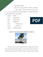 Taksonomi Dan Morfologi Rhizophora Stylosa