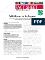 Rabbit Basics Beginner