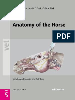 Klaus Dieter Budras Anatomy Of The Horse