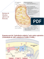 fosforilacaooxidativa