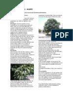 CELTIS AUSTRALIS-1fichatecnica.pdf