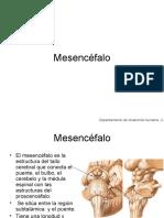 mesencefalo1