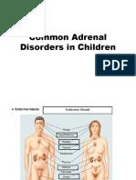 2-5-4-2-korteks-adrenal-anak