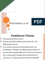 Klebsiella sp.pptx