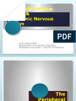 The Nervous System II ( PNS & ANS )