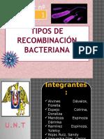 Tipos de Recombinación Bacteriana