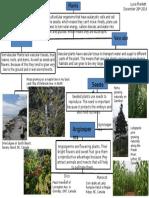 unit 8 plant classification