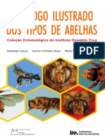 Catalogo Abelhas