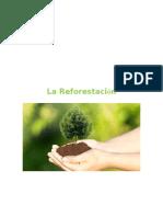 Ensayo La Reforestacion