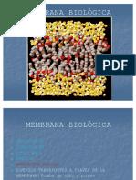 39772877 12 Membrana Biologica