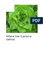 Alface Lisa