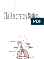 Cvm Repiratory_System 2012