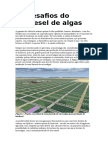 Os Desafios Do Biodiesel de Algas