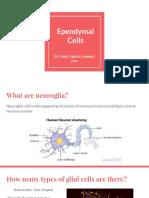 anatomy ependymal