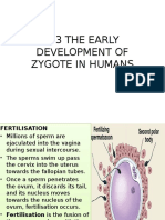 236659715 4 3 Development of Zygote