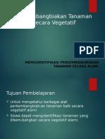 Presentasi Vegetatif SY