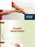 Antebrazo Posterior, Tenar, Hipotenar