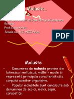 moluste_costa_cristina_iobb_patricia.ppt