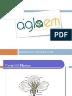 Reproductbn   .l.,,//.derswwesersgfsfgsfgion in Flowering Plants