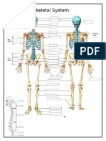 toiletdoorskeletal muscular systems blank