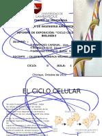 CICLO CELULAR.pptx