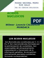 Expo- Acidos Nucleicos