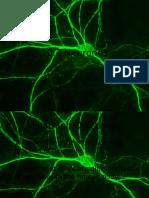 10.2 Neurones No Video