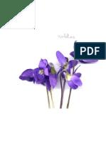 violetas (9)