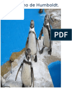 Mi Pingüino de HumboldtB JULITO