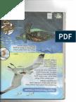 Buku Teks Organ Pernafasan Haiwan Dan Neraca Tiga Palang