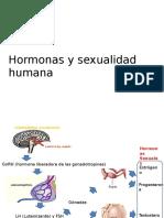 Hormonaas sexuales