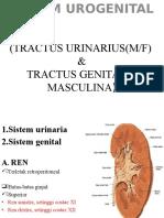 Sistem Urogenital Ml