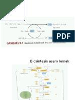 Lipid Biosintesis