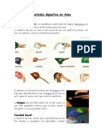 Anatomía digestiva en Aves.docx