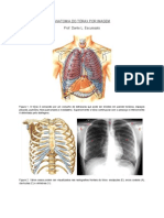 Anatomia Do Torax
