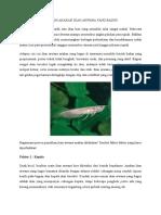 Memilih Anakan Ikan Arwana Yang Bagus
