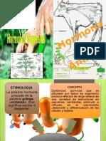 Trabajo de Biologia Hormonas Animales y Vegetales