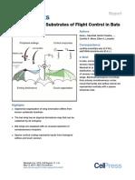 Flight Control in Bats