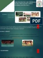 Expo de Zootecnia Porcinos